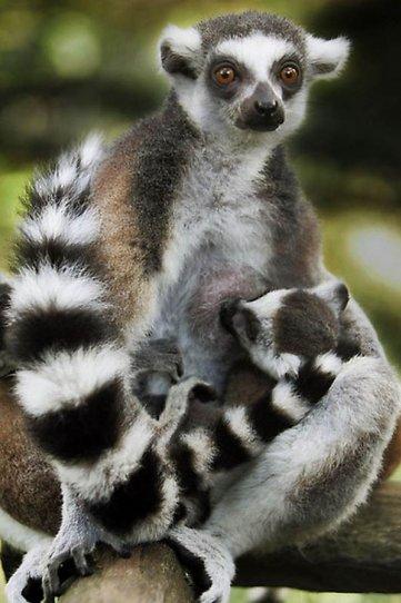 Детеныши животных – 37