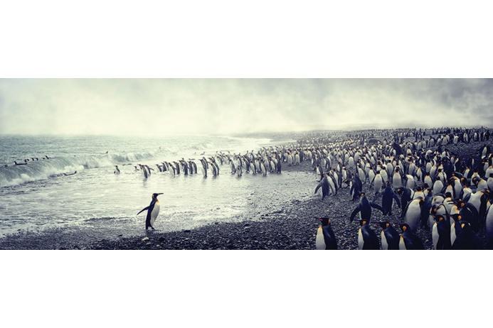 Фото Антарктиды 3 – Фотограф Алекс Бернаскони