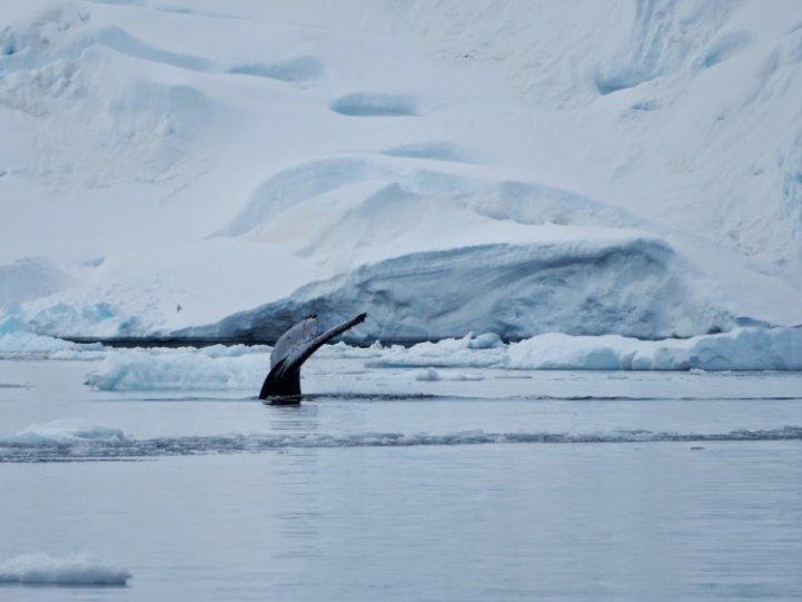 Фото Антарктиды 19