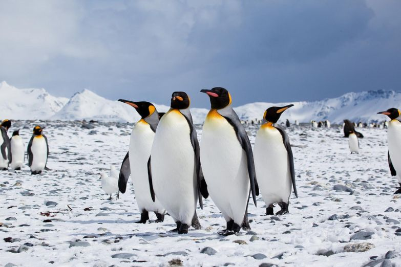 Фото Антарктиды 27