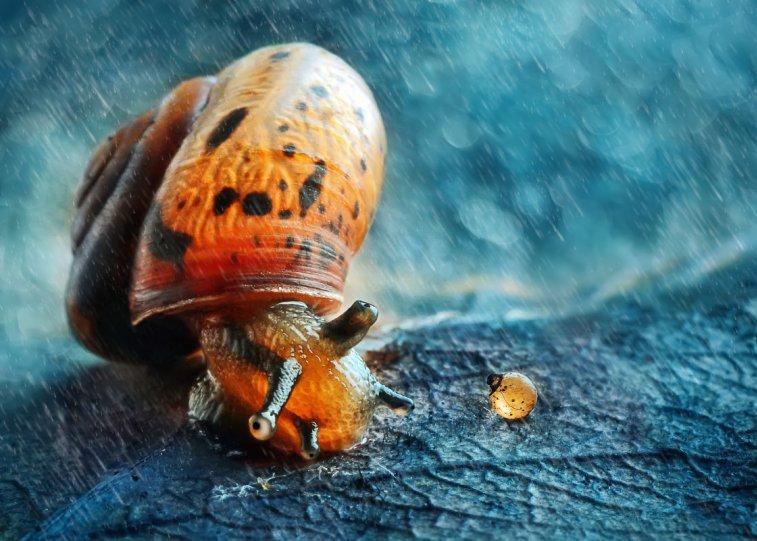 Анна Чернобай – фото насекомых