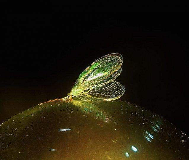 Ольга Минина – фото насекомых