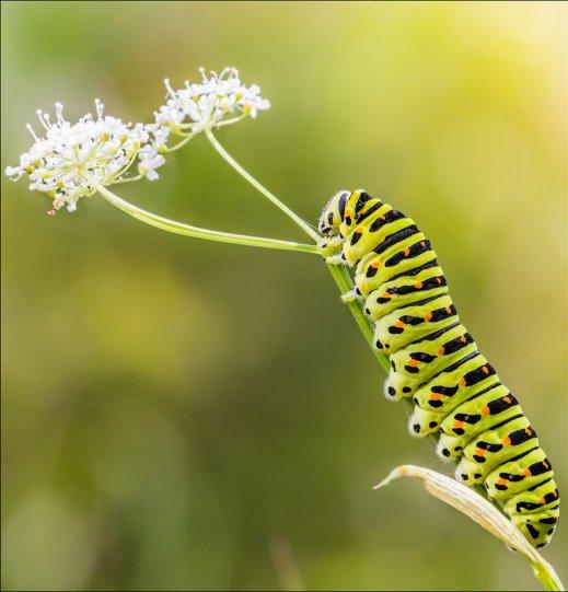 Игорь Кунин – фото насекомых