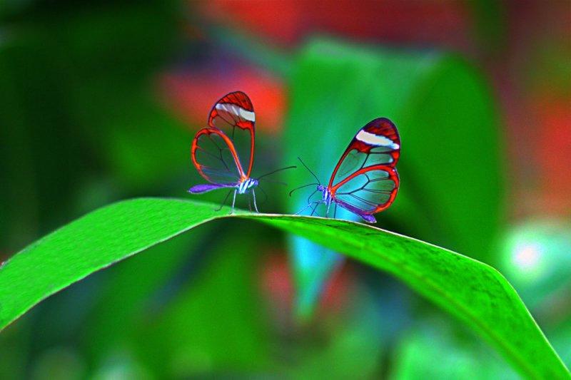 Jurijs Suhodolskis – фото насекомых