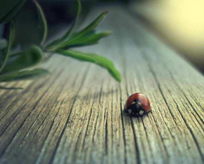 Тамрико Дат – фото насекомых