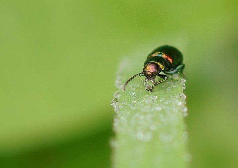 Галина Кучерина – фото насекомых