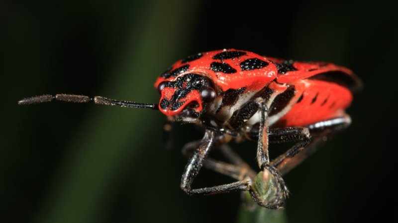 Серик Байбульсинов – фото насекомых