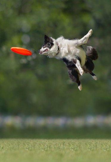 Летающие собаки Клаудио Пикколи - №10