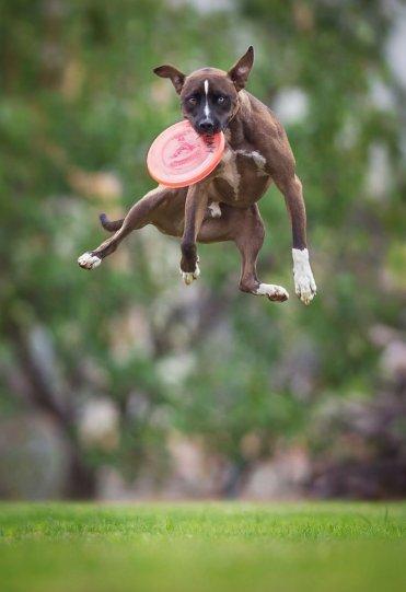 Летающие собаки Клаудио Пикколи - №13