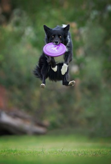 Летающие собаки Клаудио Пикколи - №15