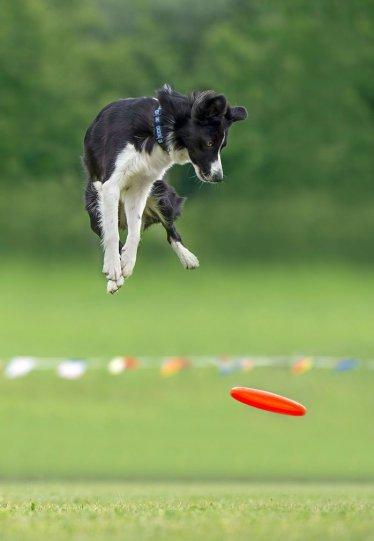 Летающие собаки Клаудио Пикколи - №19