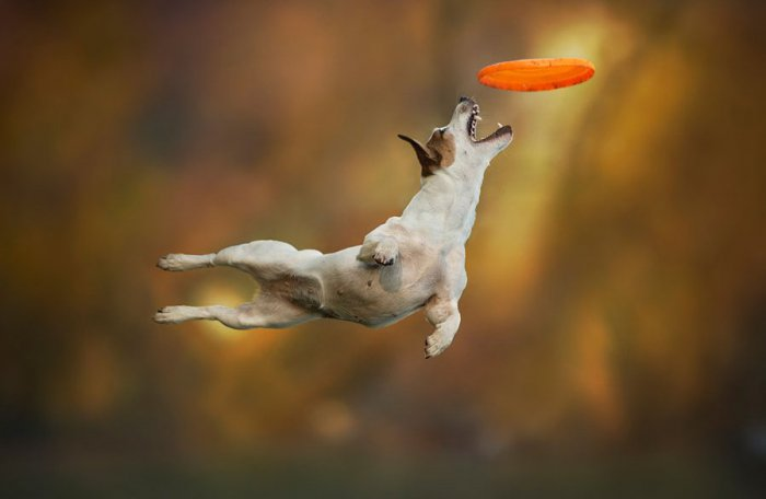 Летающие собаки Клаудио Пикколи - №1
