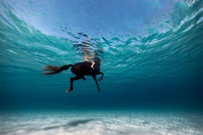 Подводная красота Энрика Адриана Генера - №5