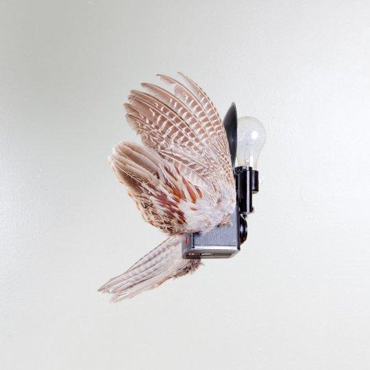 Летающие птицы-фотокамеры Пола Октавиуса - №3