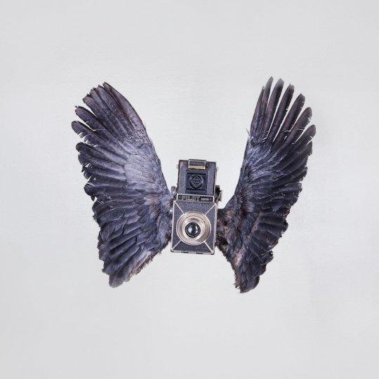 Летающие птицы-фотокамеры Пола Октавиуса - №7
