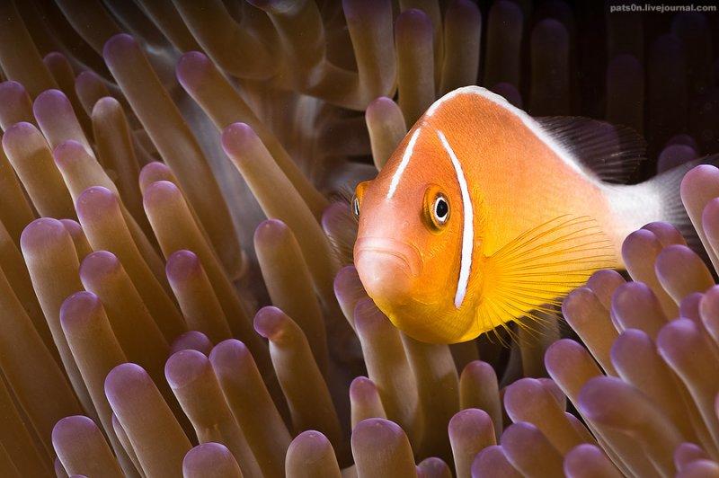Потрясающие подводные фотографии Александра Сафонова - №10