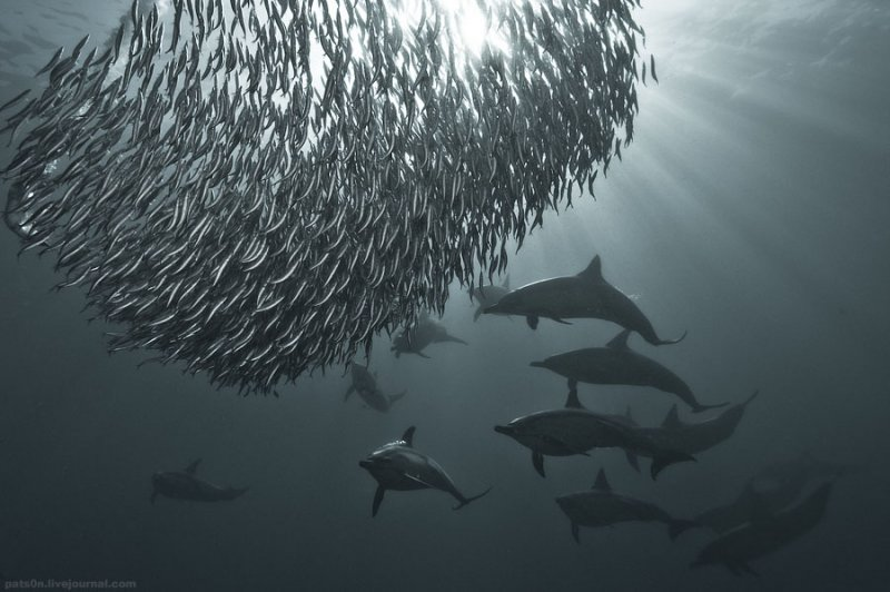 Потрясающие подводные фотографии Александра Сафонова - №14