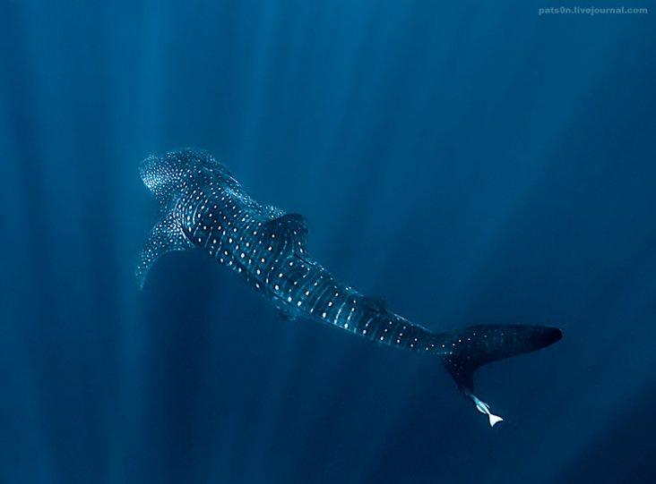 Потрясающие подводные фотографии Александра Сафонова - №18