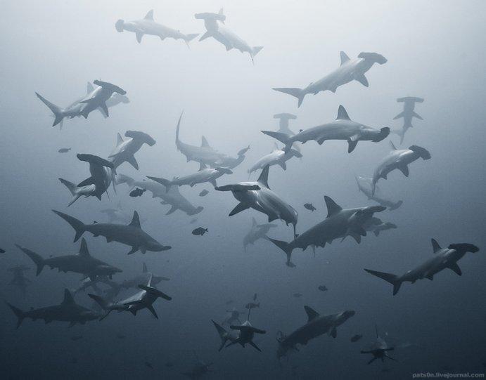 Потрясающие подводные фотографии Александра Сафонова - №4