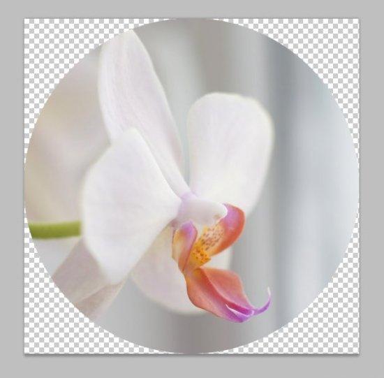 Как сделать в фотошопе фотографию в круге - конечный результат