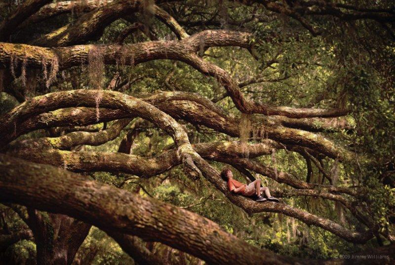 Фотографические истории из жизни Джимми Уильямса - №18