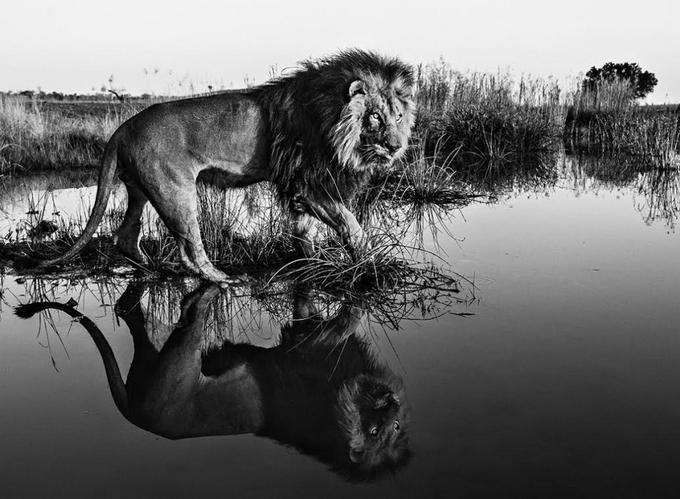 Фотограф David Yarrow - №5