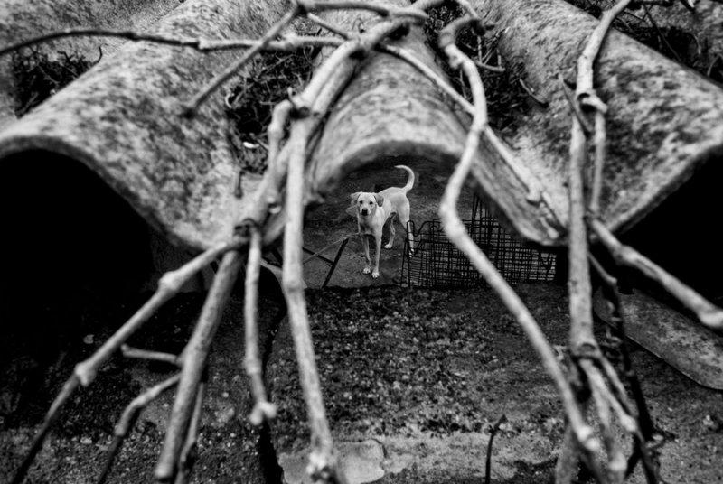 Итальянский фотограф Раффаэле Монтепаоне - №11