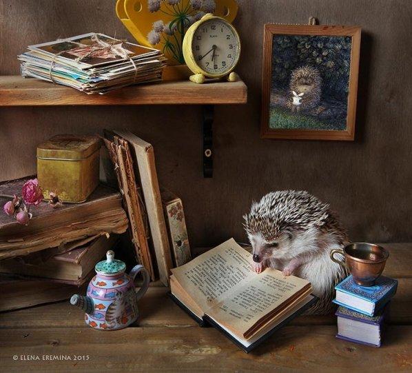 Фотограф Елена Еремина - №8