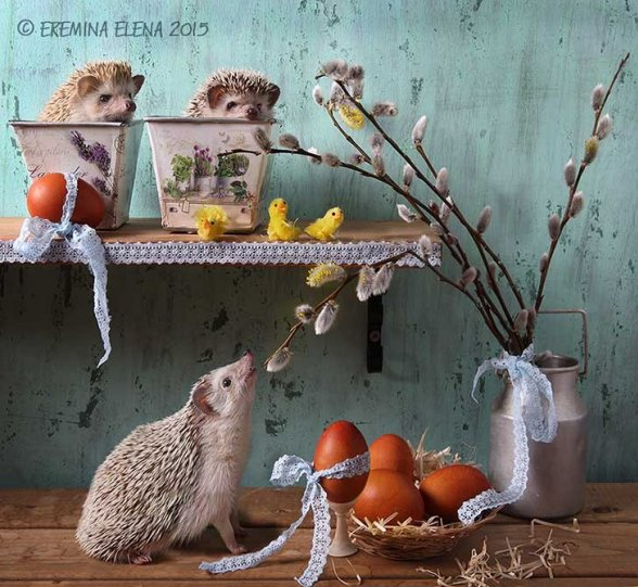 Фотограф Елена Еремина - №34