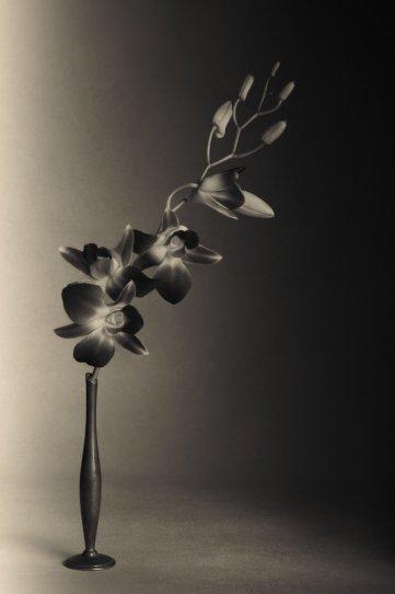 Фотограф Уильям Кастеллана - №14