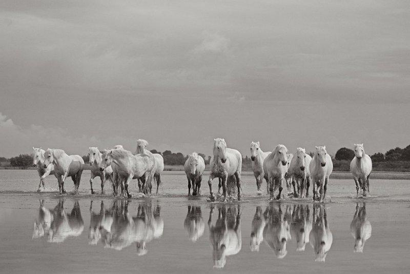 Фотограф Дрю Доггетт - №16