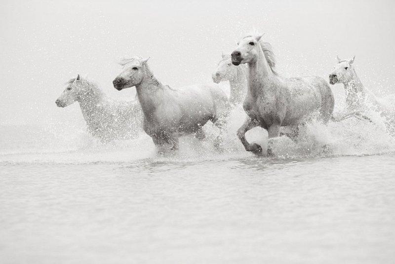 Фотограф Дрю Доггетт - №20