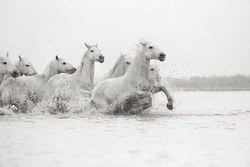 Фотограф Дрю Доггетт - №23