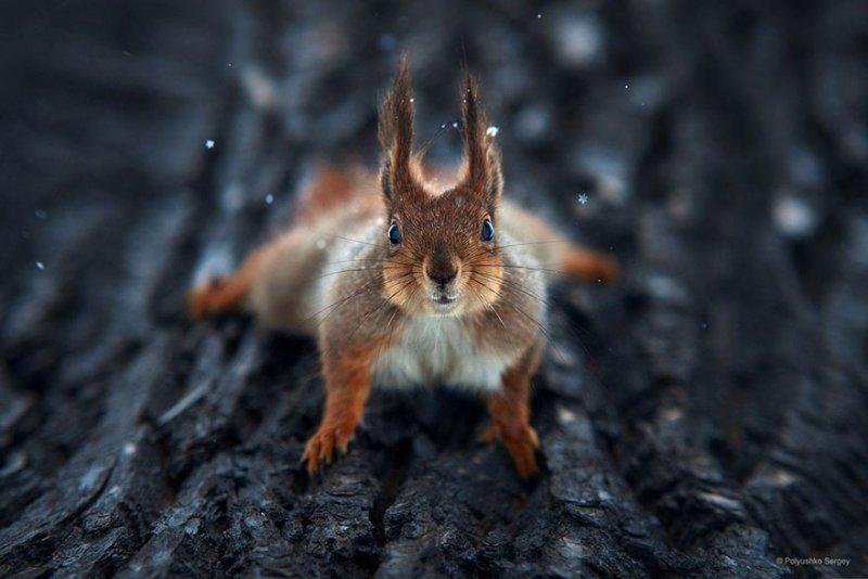 Портреты животных от фотографа Сергея Полюшко - №8