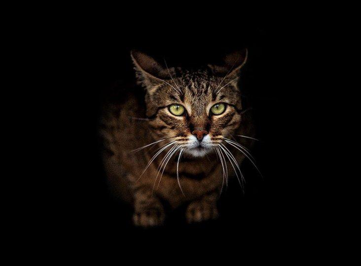 Портреты животных от фотографа Сергея Полюшко - №3