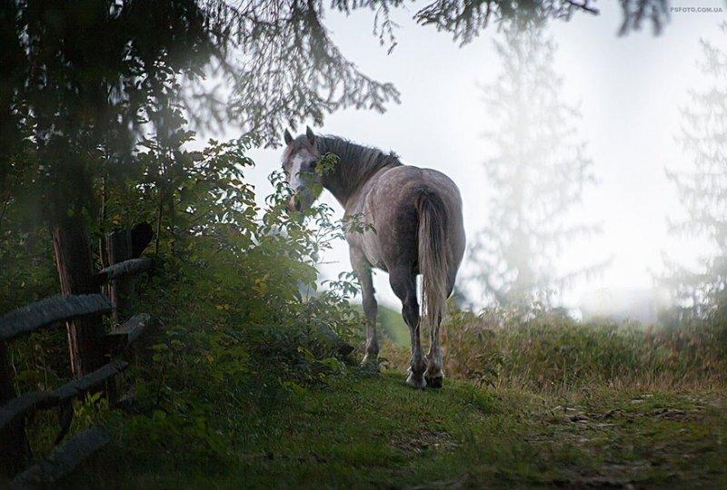 Портреты животных от фотографа Сергея Полюшко - №12