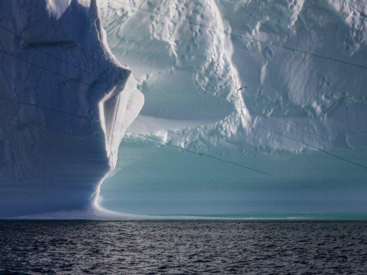 Арктика в фотографиях Дайан Тафт - №3