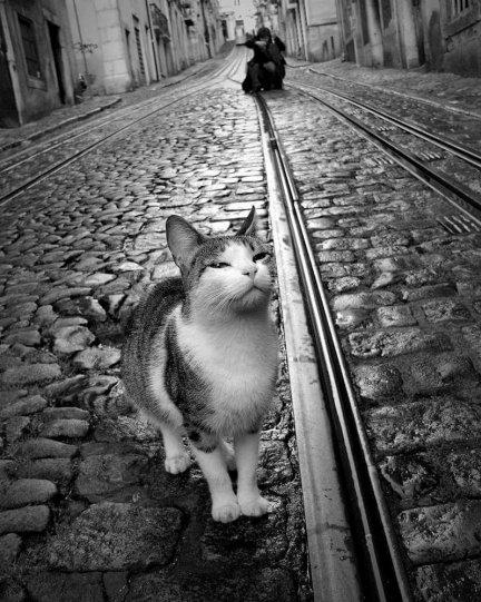 Фотограф Руи Палья - №15
