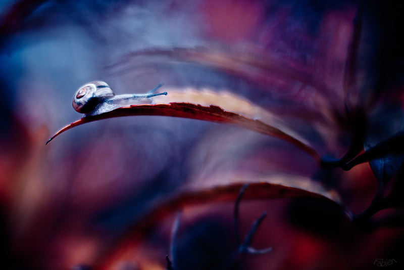 Макрофотография от Фабьена Бравина - №14