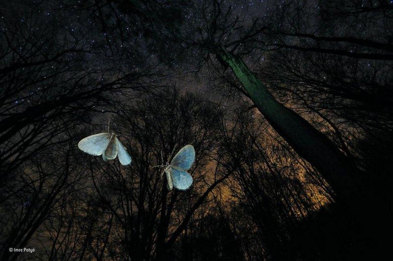 Автор фото: Имре Потьо. «Крылья зимы»