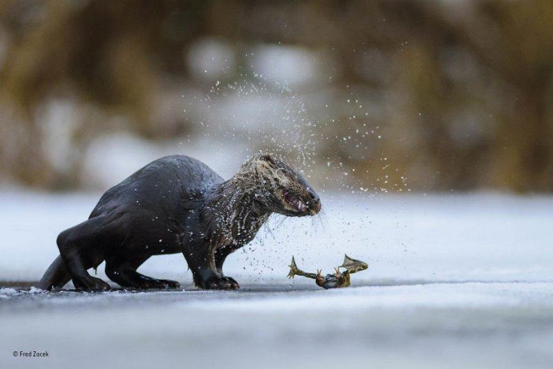 Автор фото: Фред Зацек. «Холодный улов»