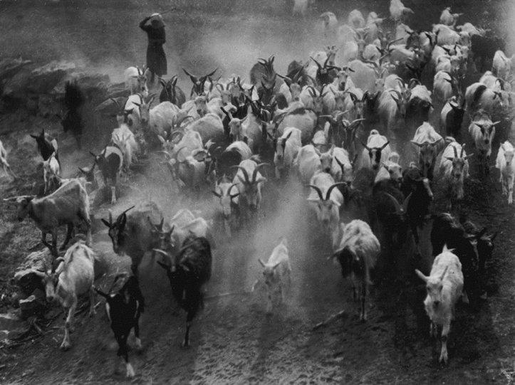 Фотограф  Эрнё Вадаш - №3