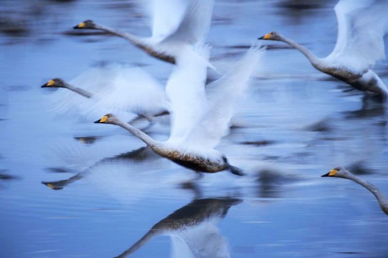 """Второе место в категории """"Природа"""": """"Жить"""", Оинукаке, префектура Мияги, Япония, автор – Хироми Кано"""