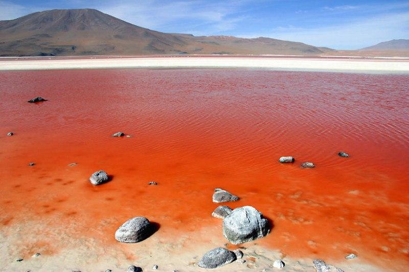 Лагуна Колорада, минеральное озеро в Боливии