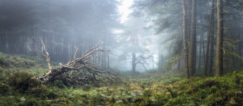 Автор фото: Саймон Бакстер (Simon Baxter). Место съёмки: Северный Йоркшир, Англия.