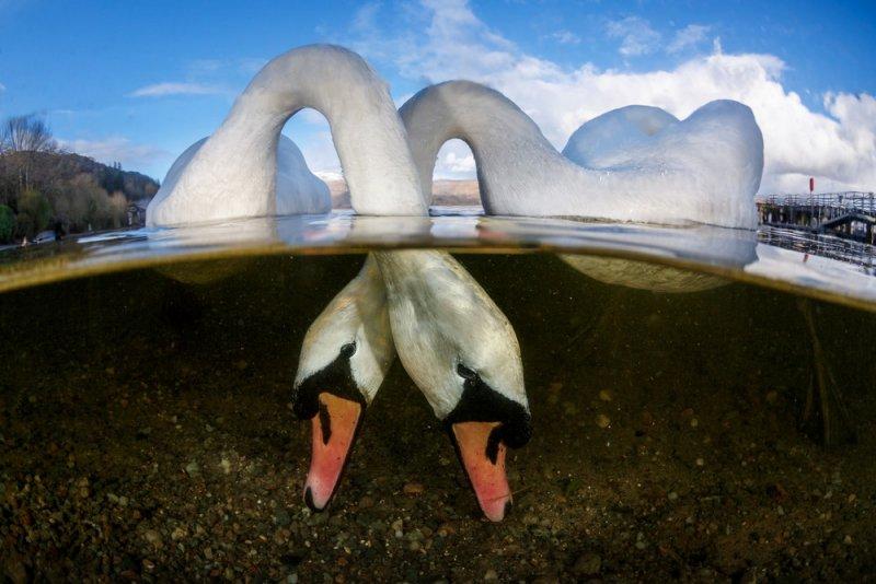 Автор фото: Грант Томас (Великобритания). Место съёмки: озеро Лох-Ломонд, Шотландия.