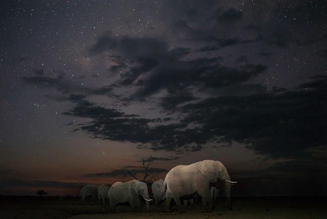 «Безмолвное путешествие». Джеймс Гиффорд, Ботсвана