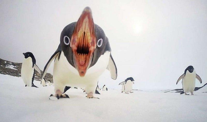 20 самых шедевральных снимков, сделанных для National Geographic - №1