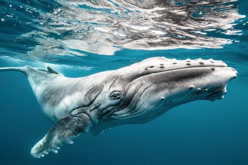 20 самых шедевральных снимков, сделанных для National Geographic - №5