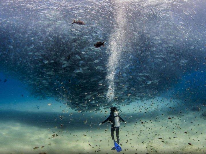 20 самых шедевральных снимков, сделанных для National Geographic - №13